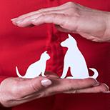 Assurez votre animal de compagnie